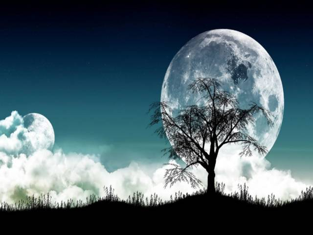 Picturelobos, wolfs, wallpapers, plano-de-fundo, cachorro,full hd,moon