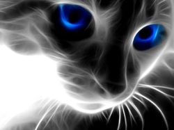 wallpaper de gatos cat
